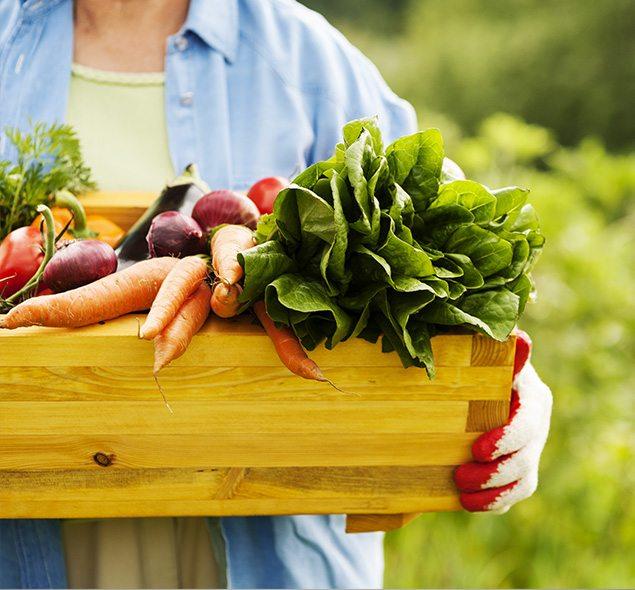 razões-consumir-organicos